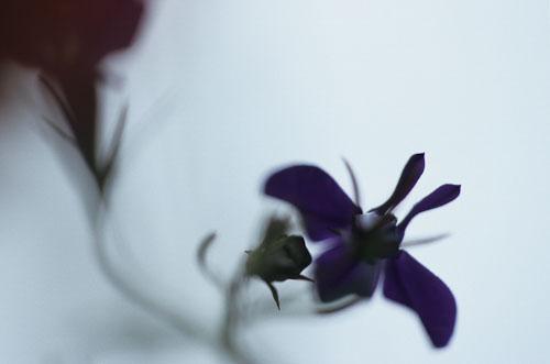 AP_flora-2.jpg