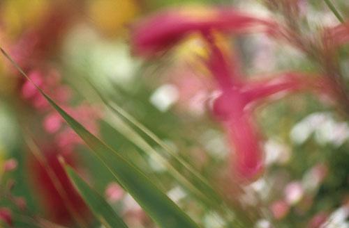 AP_flora-5.jpg