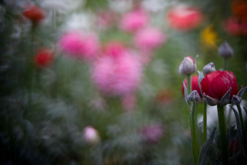 AP_flora-1.jpg