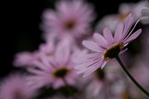 AP_flora-9.jpg